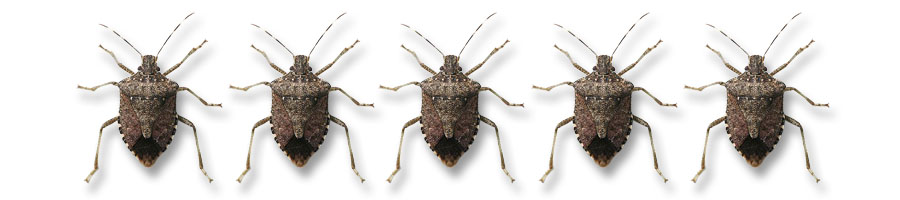 Stink Bug Banner Titanium Laboratories | kill stink bugs | stink bug pest control