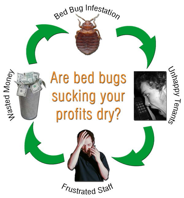Commercial Bed Bug Exterminator Service by Titanium Laboratories