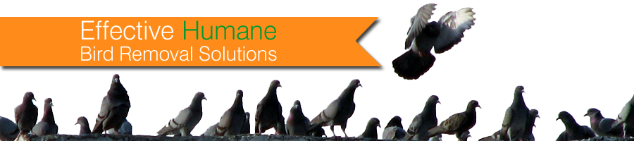 Residential Bird Control | pigeon removal | bird removal services